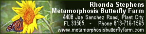 Bronze Sponsor: Metamorphosis Butterfly Farm
